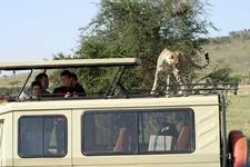 Our Safari Car 1