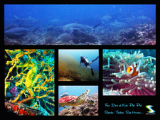 Scuba Diving Phi Phi Vincent S