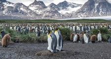 Antarctica 35093