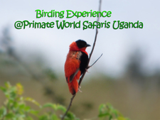 Birding Exp