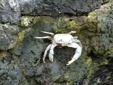 Crab On Seawall