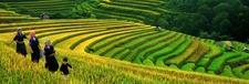 Green Vietnam Medium