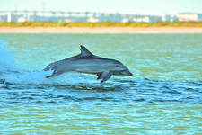 Dolphin Dance 4
