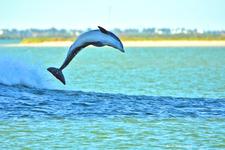 Dolphin Dance 5