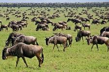 Tanzania Serengeti Adventure 2