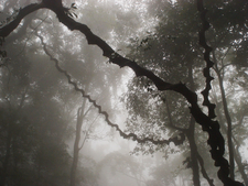 Ba Vì National Park, Cloud Shrouded Forest