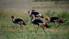Dsc 05330653 Uganda2008 9