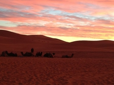 Sunset & Camels In Merzouga Desert