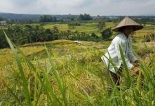 Jatiluwih Rice Field