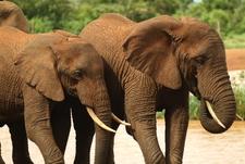 Aberdares Elephants