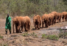 Young Elephants At Daphne Sheldrick