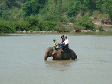 Elephant Safari At Yok Don National Park