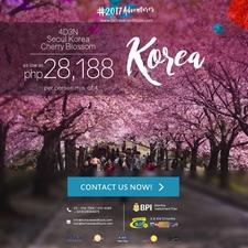 Cherry Blossom Seoul Korea La 2017