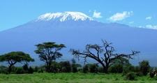 Kilimanjaroamboseli