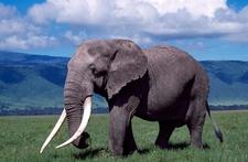 Adventures Safaris Pic