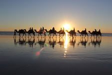 Broome Camel Ride 48