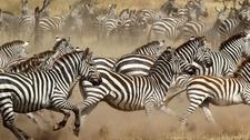Serengeti 11