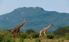Tsavo East National Park 014