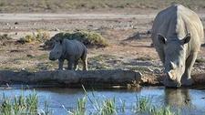 Rhinoclaf Inverdoorn