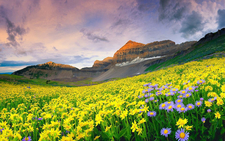Valley Of Flowers 3