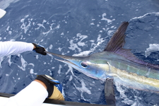 Azores Sport Fishing Charter