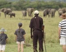How To Create A Memorable Small Group Safari To Rwanda 960x750