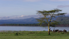 Lake Nakuru National Park 10