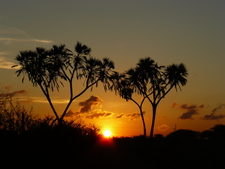 Sunset - Nguuni Park