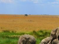 The Insight Tanzania Safaris