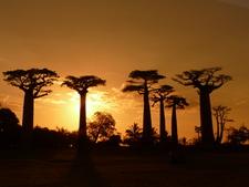 Coucher Baobab
