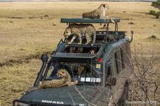 Photo Safari Exposuretours 43