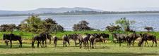 Tavernsolia Prime Safaris Tours K Lake Naivasha Image