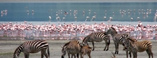 Tavernsolia Prime Safaris Tours K Lake Nakuru Image