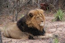 Botsawana Wildlife