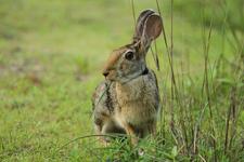 359 Rabbit
