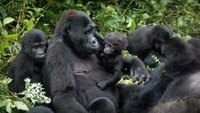 3 Day Uganda Gorilla Express 1