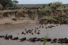 Africa Vast Wildlife 4