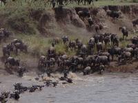 Africa Vast Wildlife 2