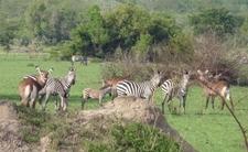 Nninzi Tours And Safari Holiday Tour Company Uganda East Africa Wildlife 1 Www Nninzitours Com