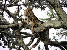 Safari Mylankatour 2