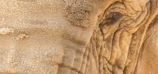 Elephant 960x447