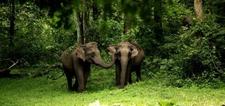 Elephants Wayanadu