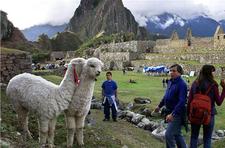 Machu Picchu Tour From Cusco Llamas