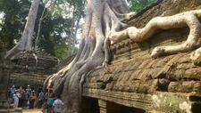 Ta Prohm By Angkorlifetravel