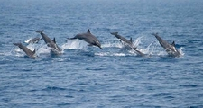 Whale And Dolphin Watching In Kalpitiya In Sri Lanka