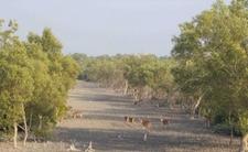 Sundarban Natural Deer Image By S M T 09732466250