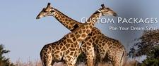 Banner African Safari 2