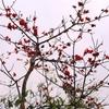 Mahua Flower In Summer