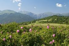 Valle Des Roses