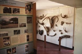 Olduvai Gorge Museum Interior